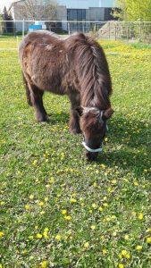 eigenes-pferd-pony