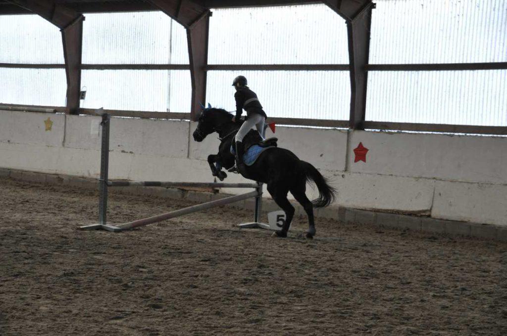 eigenes-pferd-springen